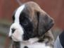 A-Puppies von Steveland