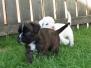 B-Puppies von Steveland