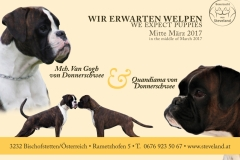 Boxerzucht_Niederösterreich
