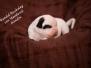 G-Puppies von Steveland