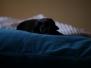 H Puppies von Steveland